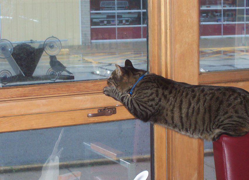 Foote Pet Talk cat pounce