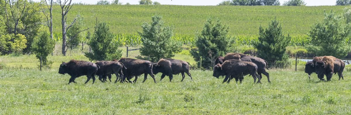 08232020  busi bison 10