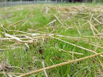 ITG 09192020 fall lawn seeding
