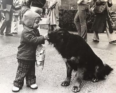 Voices Karplus dog