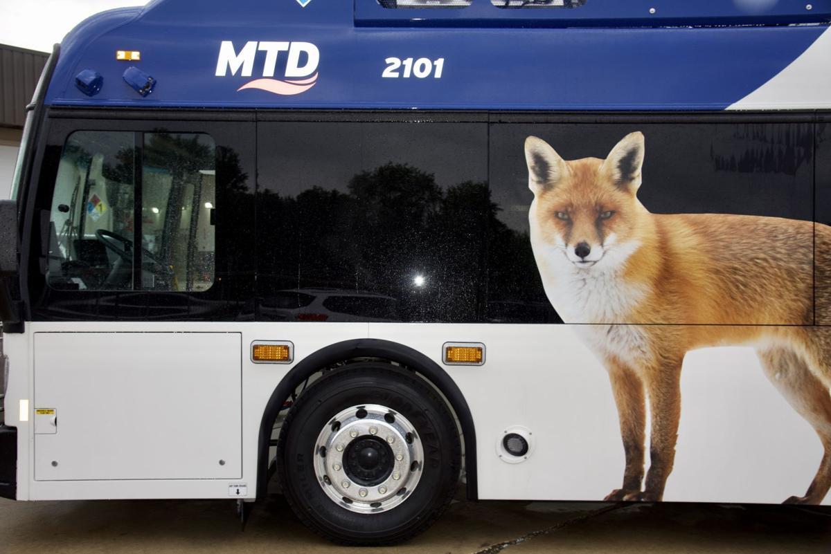 fox side.jpg