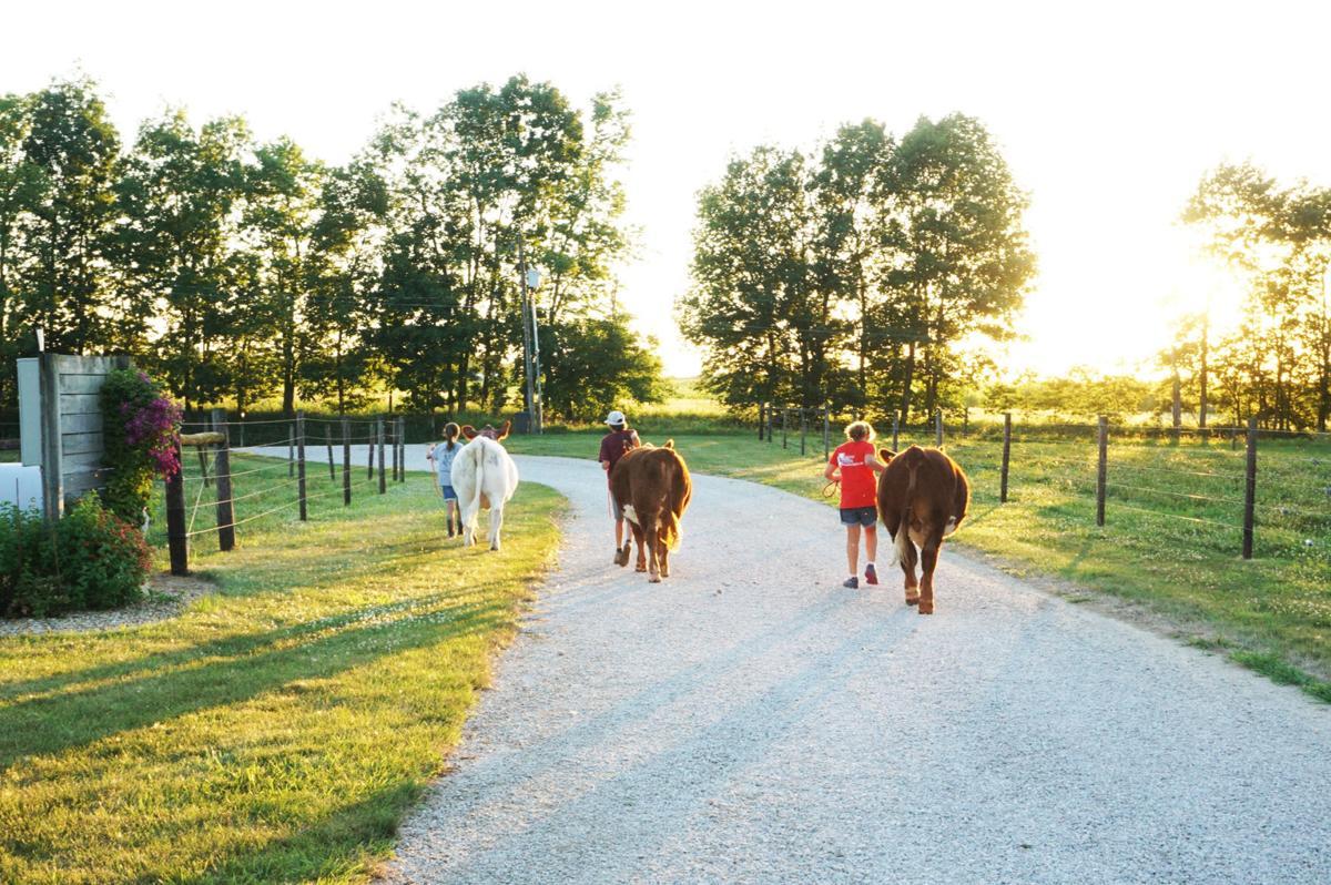 Leading cattle.jpg
