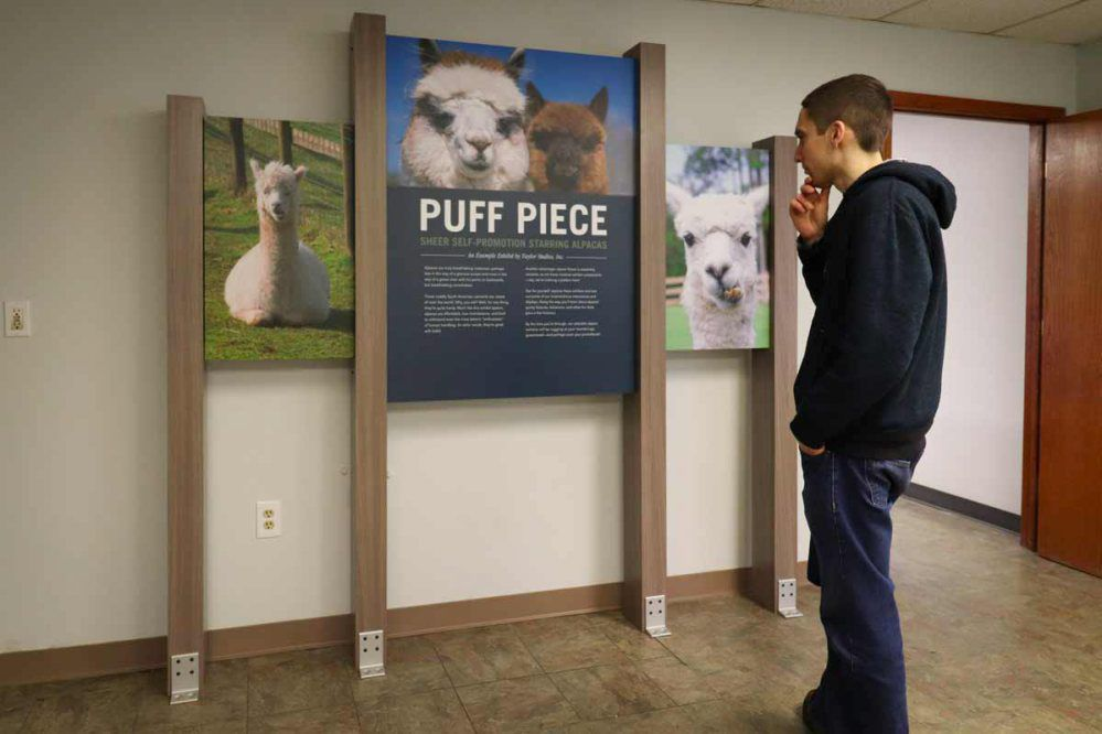 madness alpaca exhibit