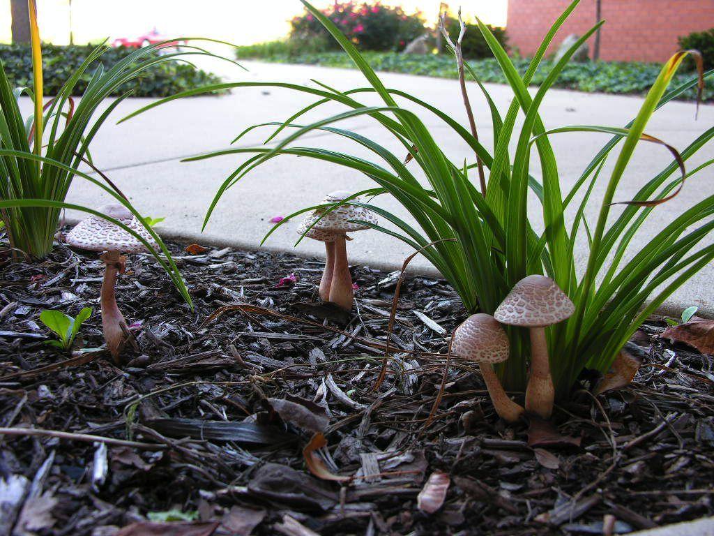 Sandra Mason: Emerging mushrooms | Local News | news-gazette com