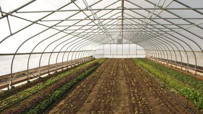 In the Garden | Strategic plantings