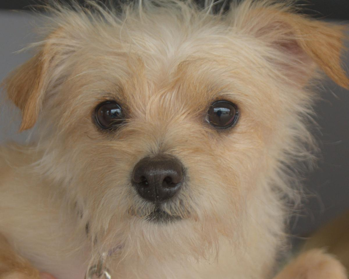 Pets of the Week: March 31, 2019 | Lifestyle | news-journal com