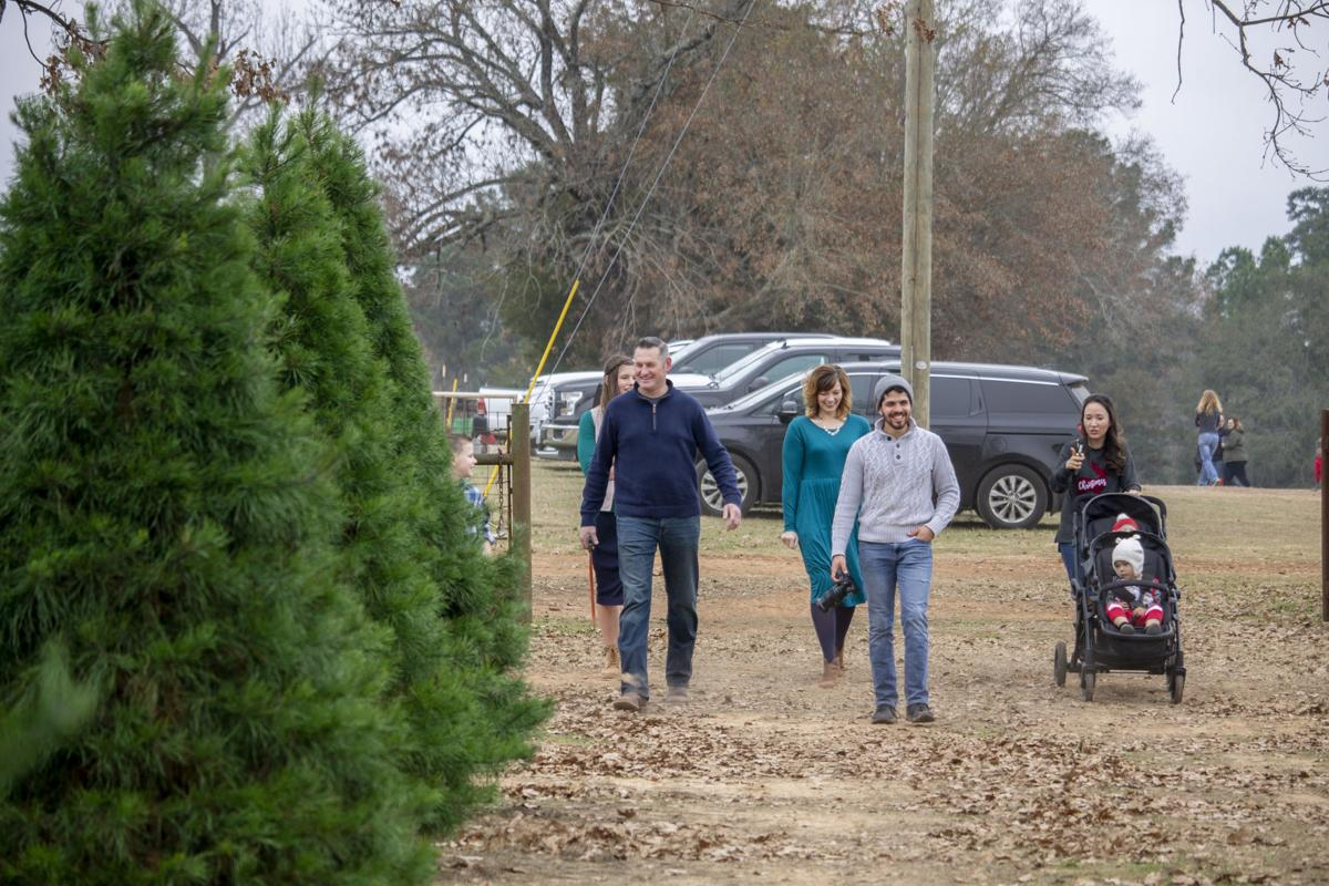 Danville Farms Christmas Trees 3.jpg
