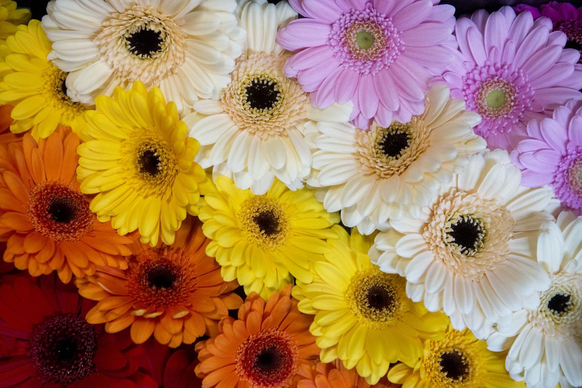 Flowers Play Vital Role For Easter Lifestyle News Journal