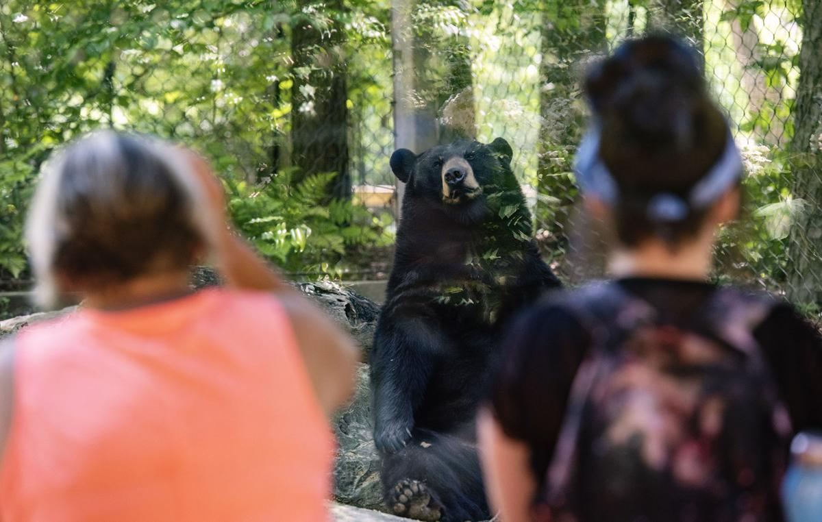 Tyler's Caldwell Zoo reopens early with COVID-19 precautions