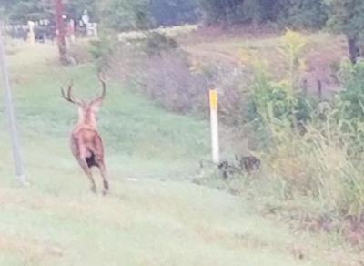 Elk in Gregg County