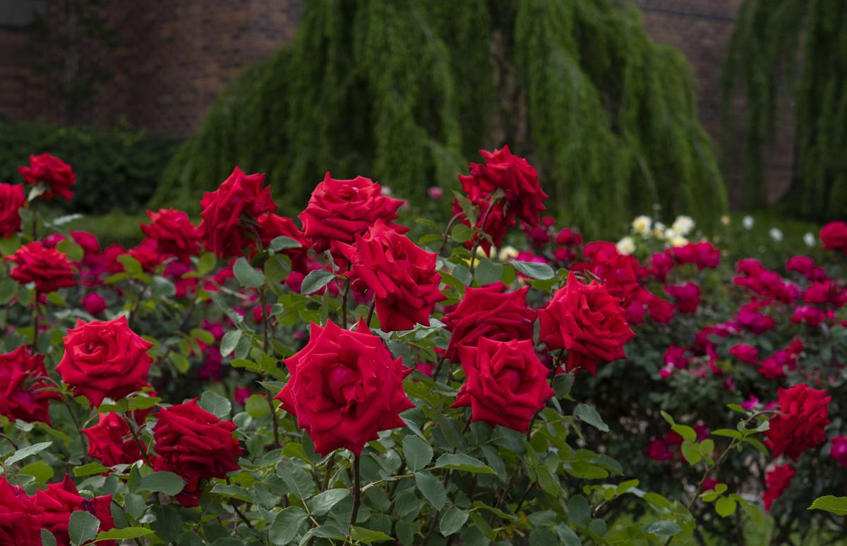 Tyler Rose Garden added to National Register of Historic Places