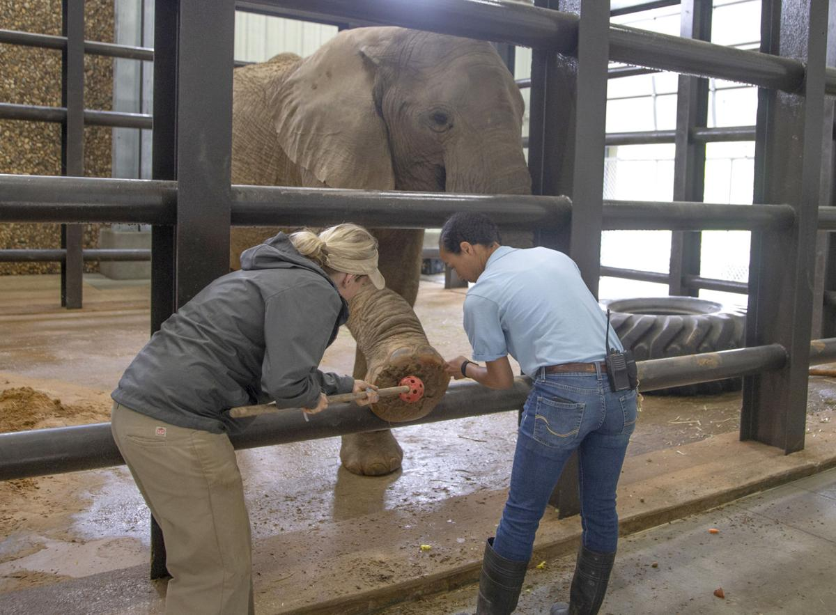Tyler's Caldwell Zoo adds 2 elephants from San Diego | Local