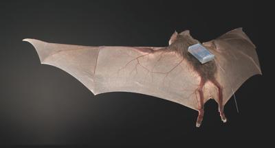 KIDSPOST-BATS