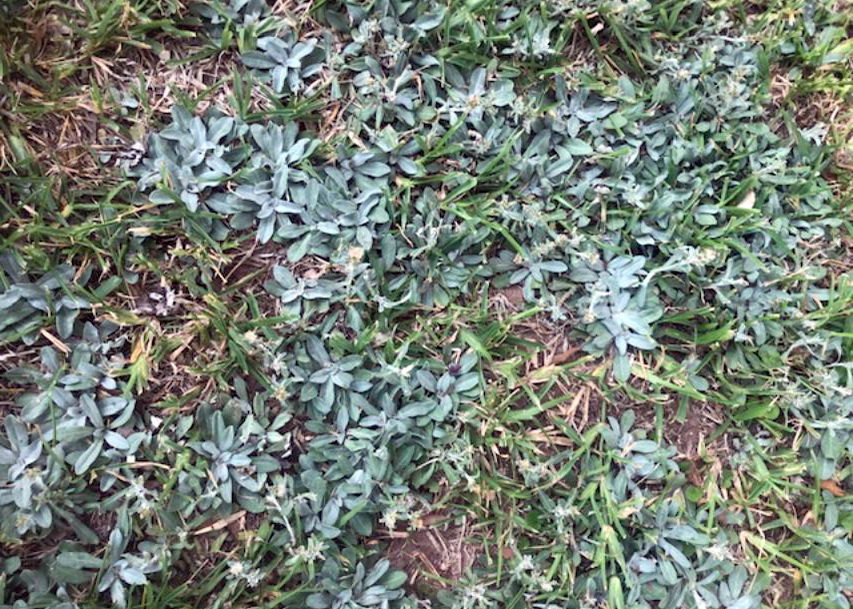 11.25.19 Weed  to ID and control.jpg