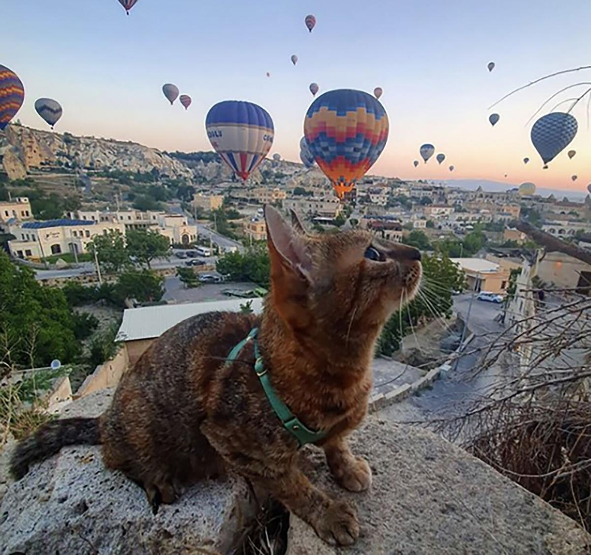 KIDSPOST-CAT