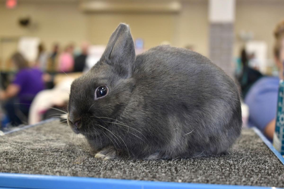 East Texas Rabbit Breeders Association's Rabbit Show