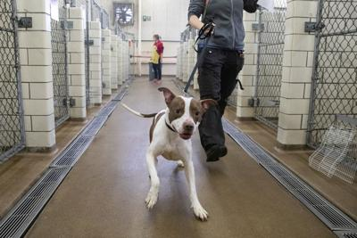 Virus Outbreak Pet Adoptions