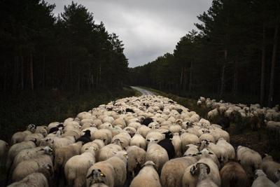 APTOPIX Virus Outbreak Spain Stricken Countryside