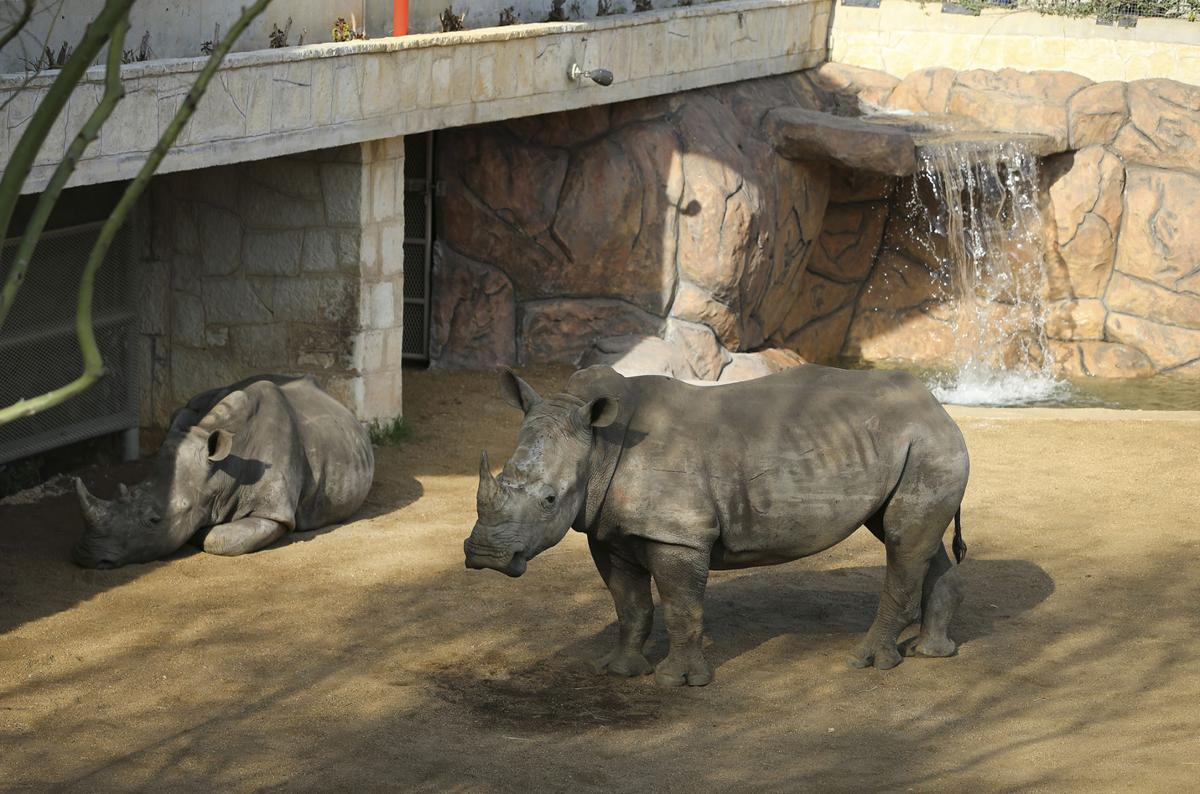 Exchange Zoo Rhino Habitat