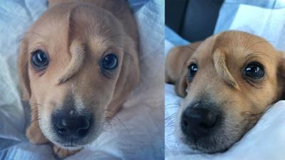 Meet Narwhal, the puppy found with a tail growing out of his head