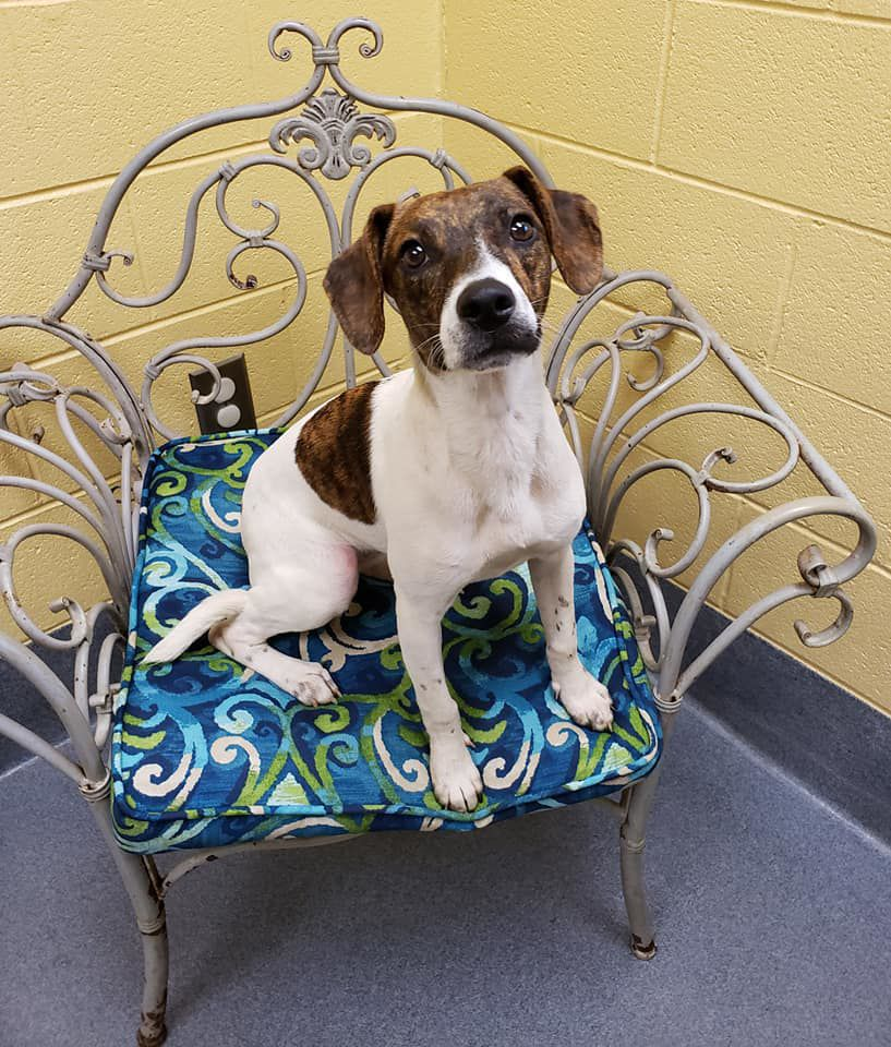 Amherst County Pet of the Week, Amherst - Cersei