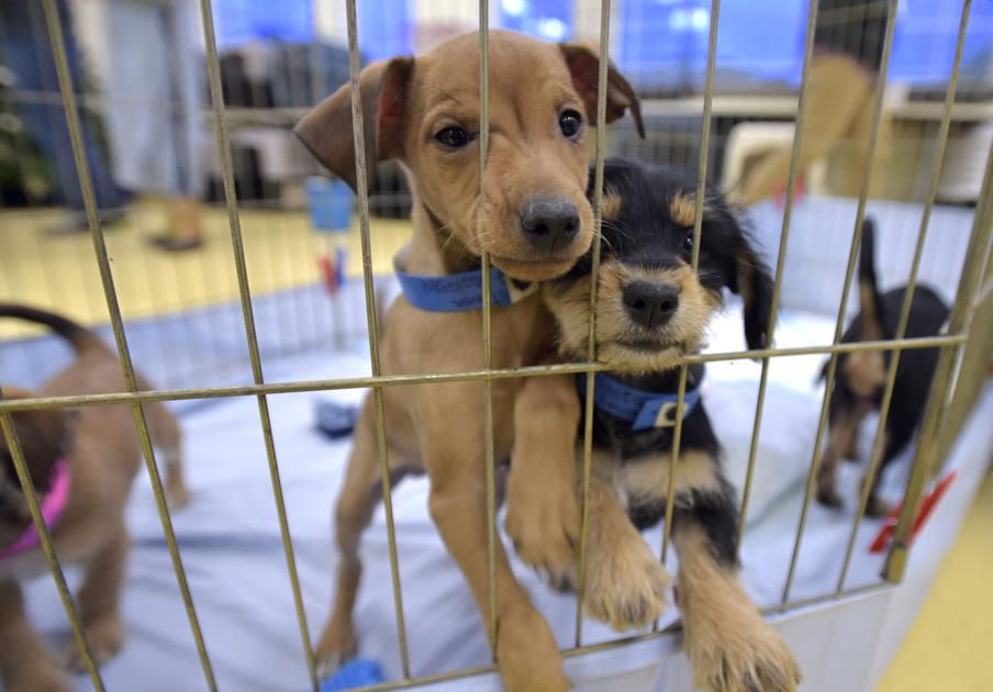 Nearly Two Dozen Rescue Puppies Spend Night In Hill City Amid Cross