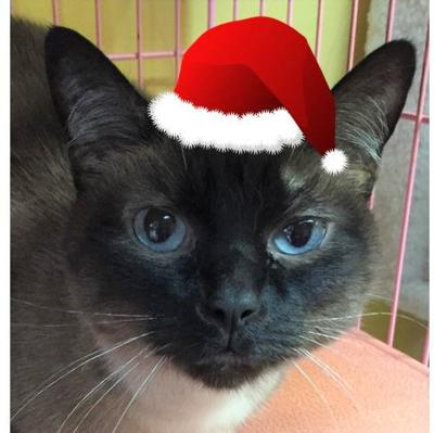 Nelson County Cat of the Week