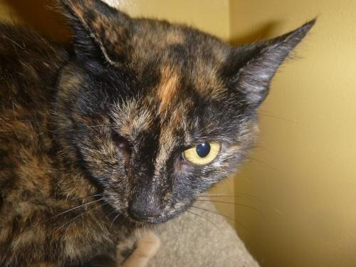 Cat, Ann Bonnie