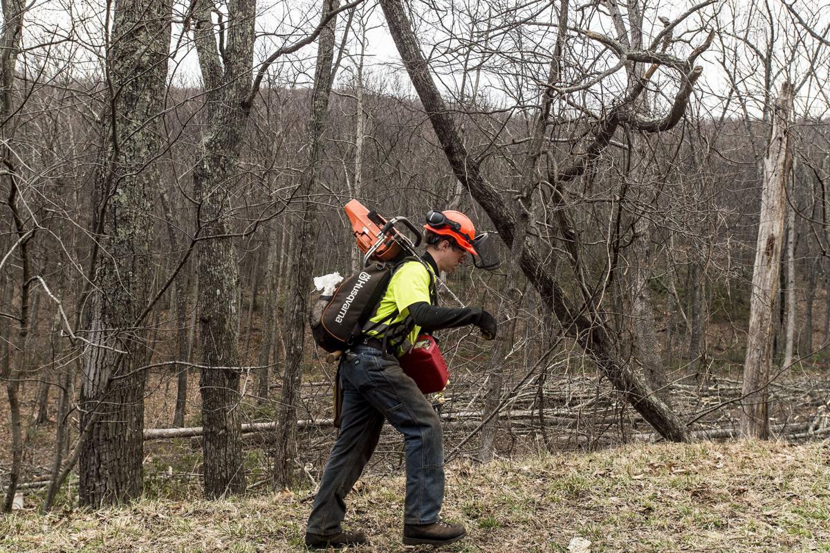 LNA 03072018 ACP Cutting Trees 07.JPG