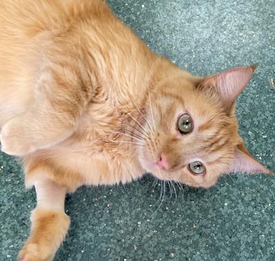 George, cat of the week