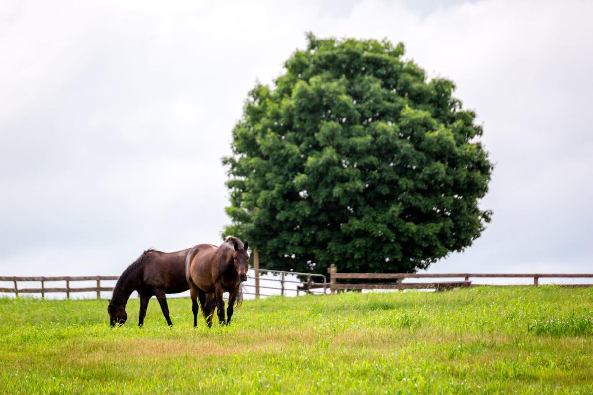 Sweet Briar horses 02