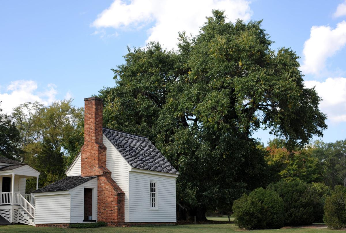 Osage orange tree 1