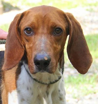 Nelson County Dog of the Week: Willard