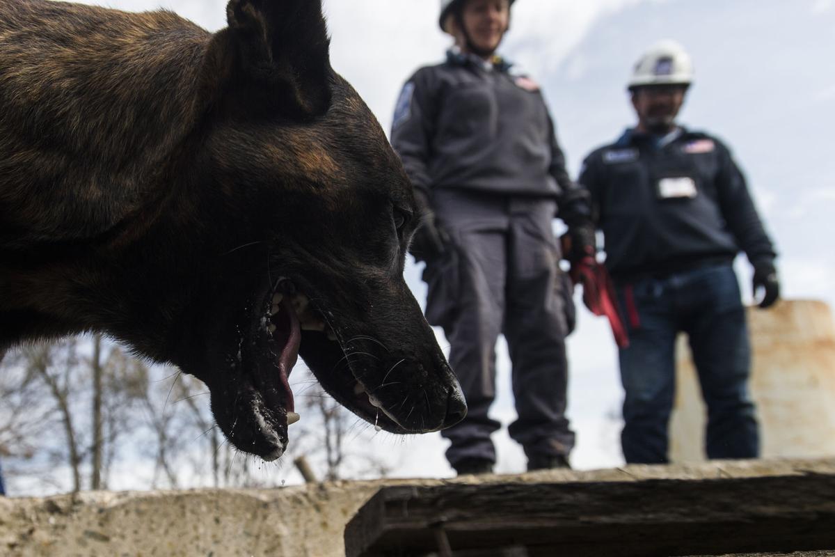 Dog Training Bedford Va
