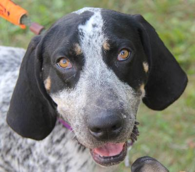 Nelson County dog of the week