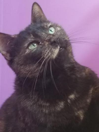 Nelson cat, Tammy