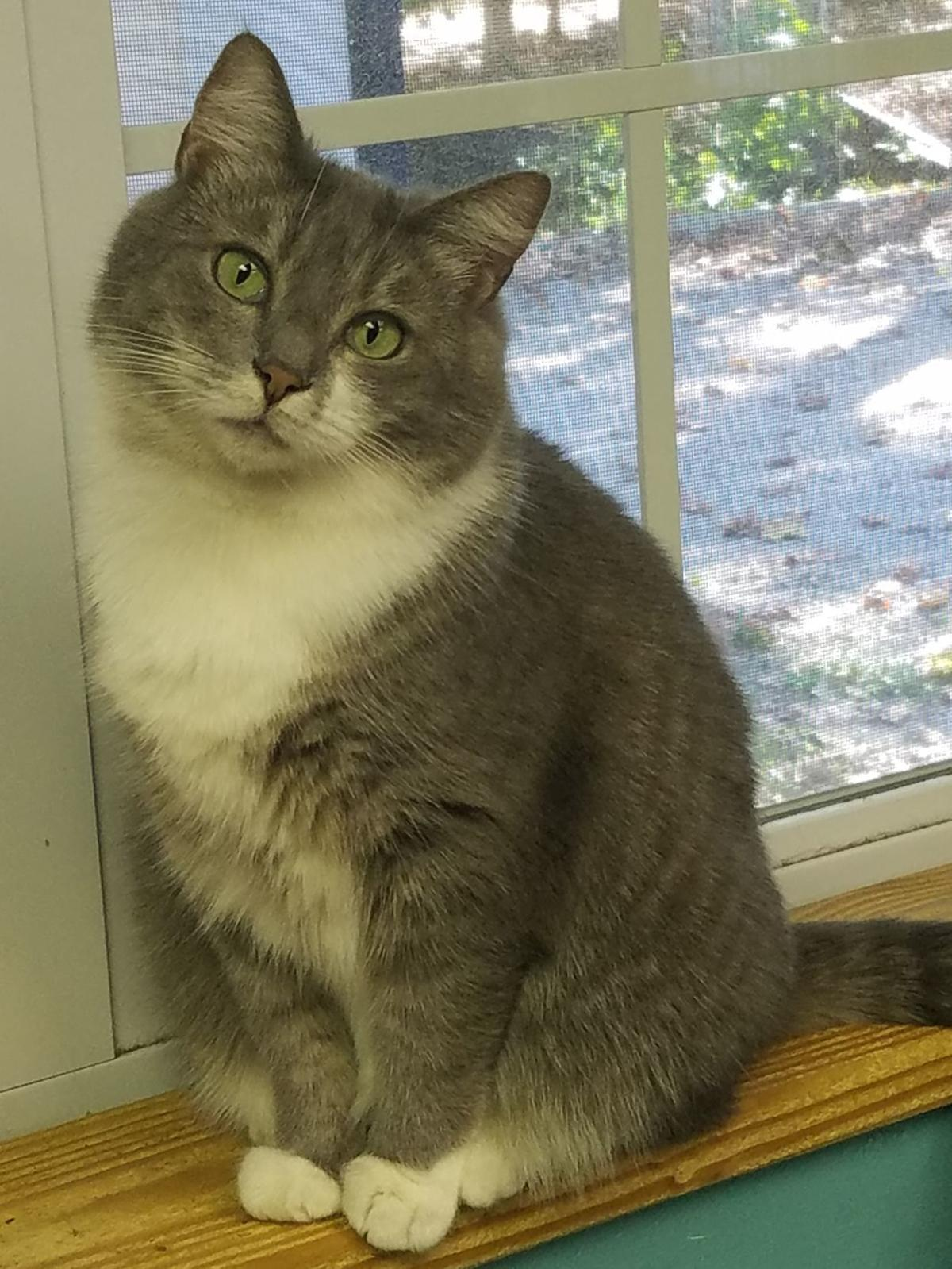 Nelson County Cat of the Week: Odette