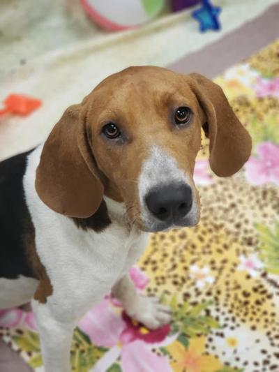 Amherst pet of the week, Standley