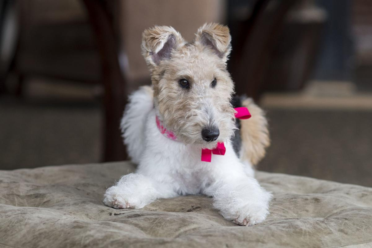 New Craddock Terry hotel dog has big pawprints to fill | Local News ...