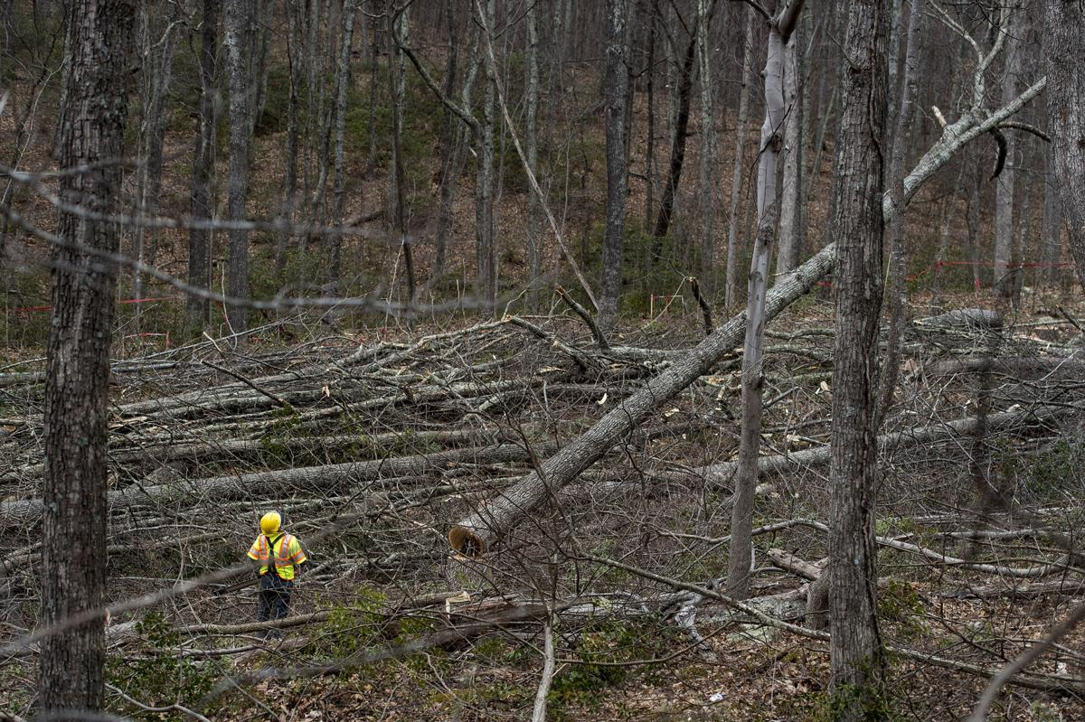 ACP tree cutting