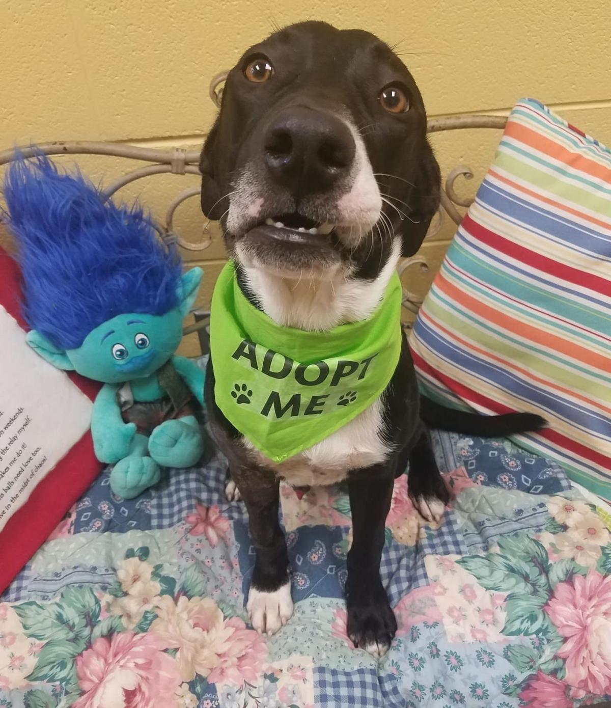 Amherst County Pet Of The Week 2018 Community Newsadvance Com