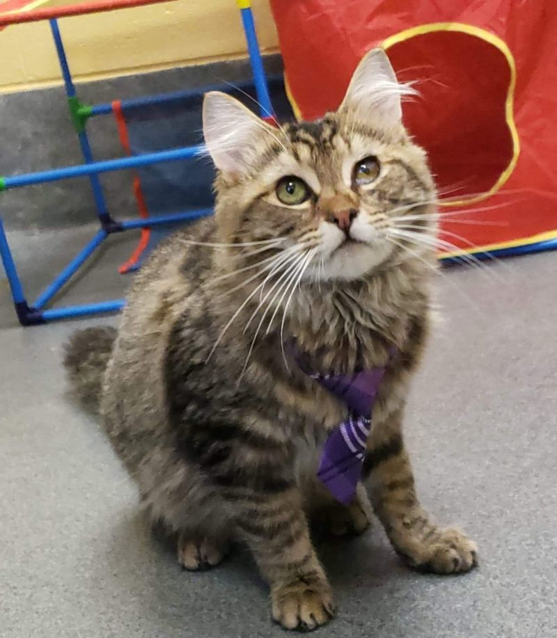 Amherst County Pet of the Week: Hashbrown