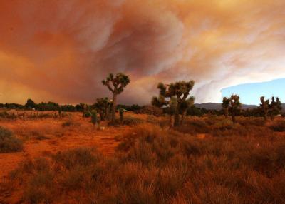 Wildfire Fund Joshua Tree