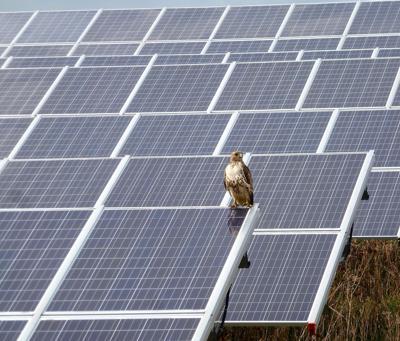 Solar Hawk 0319