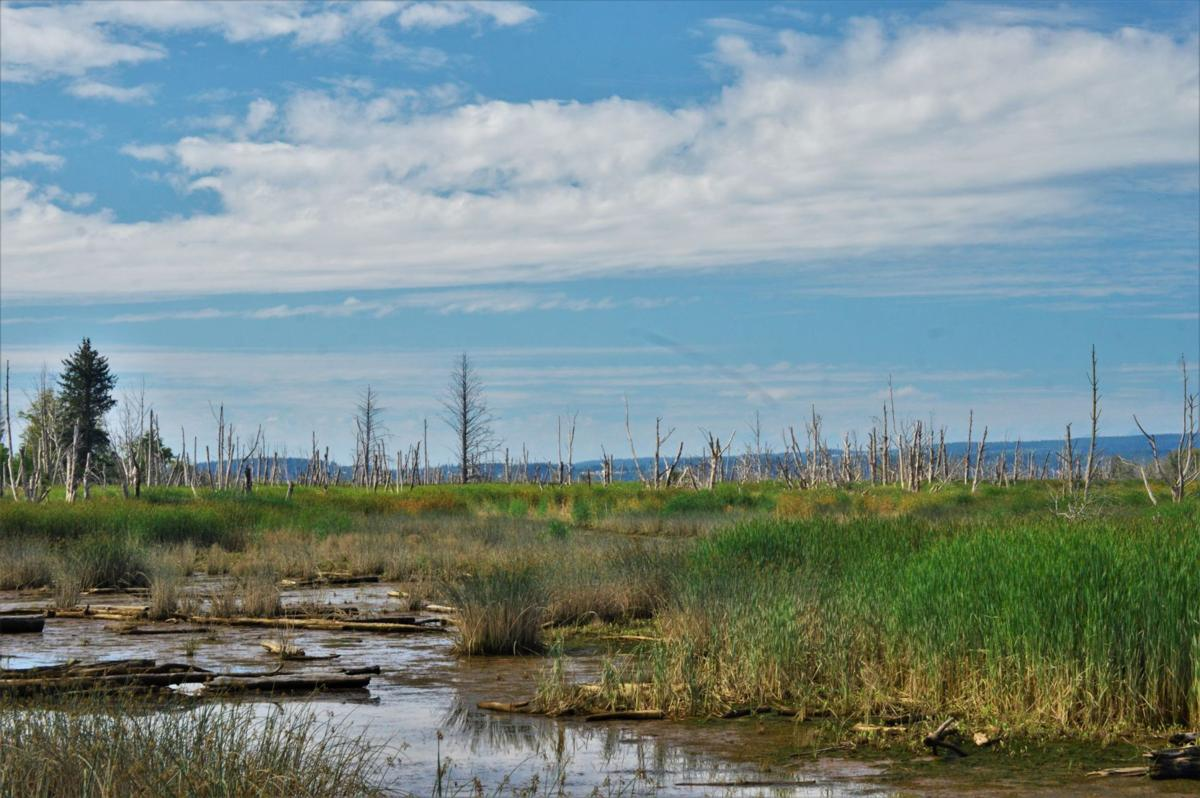 Skagit Wetland Pot0522
