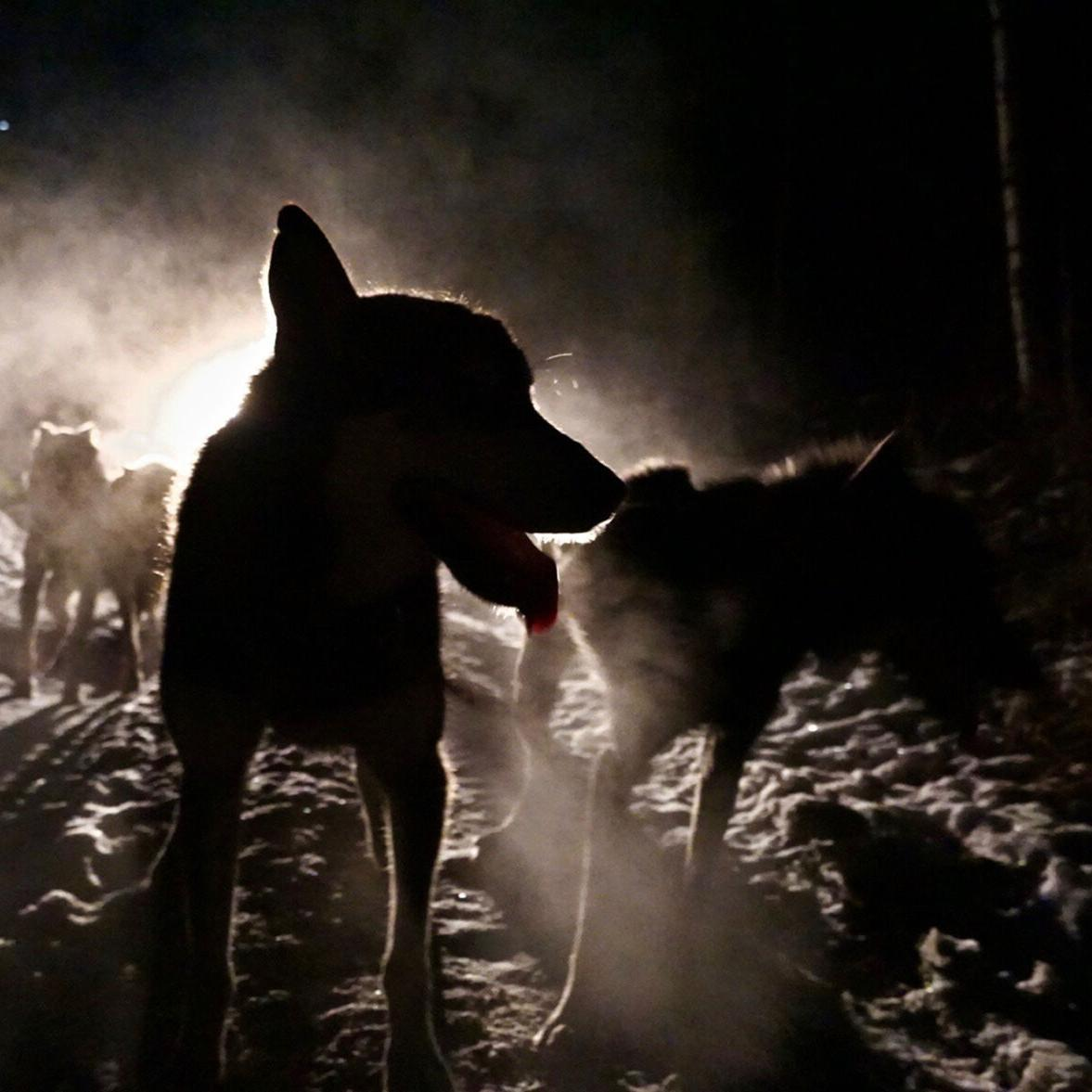 A sense of mushing with a personal touch: Last Frontier Mushing