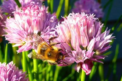Honeybee and herbals