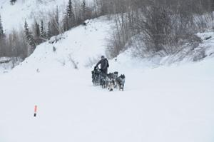 Yukon Quest dog team arrives in Dawson; minutes later its musher arrives, too