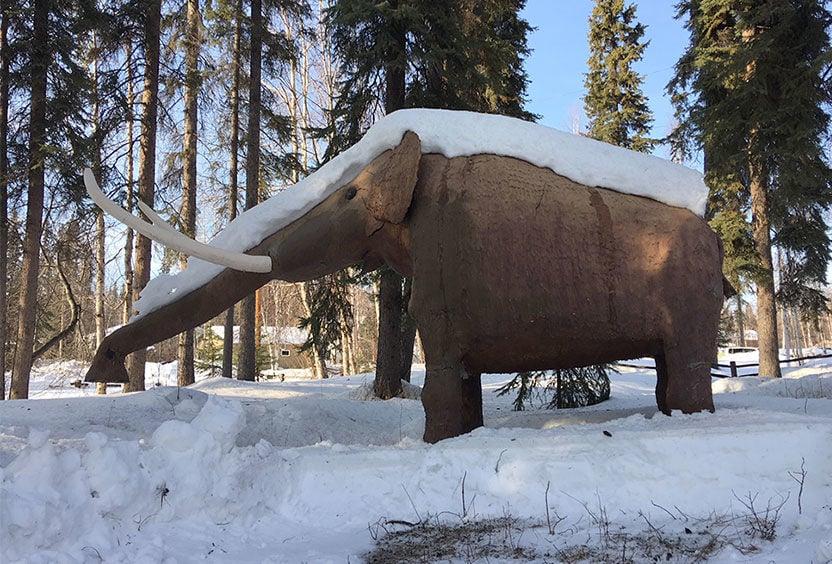 Fairbanks mastodon