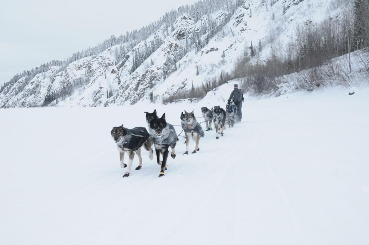 Yukon Quest 2020